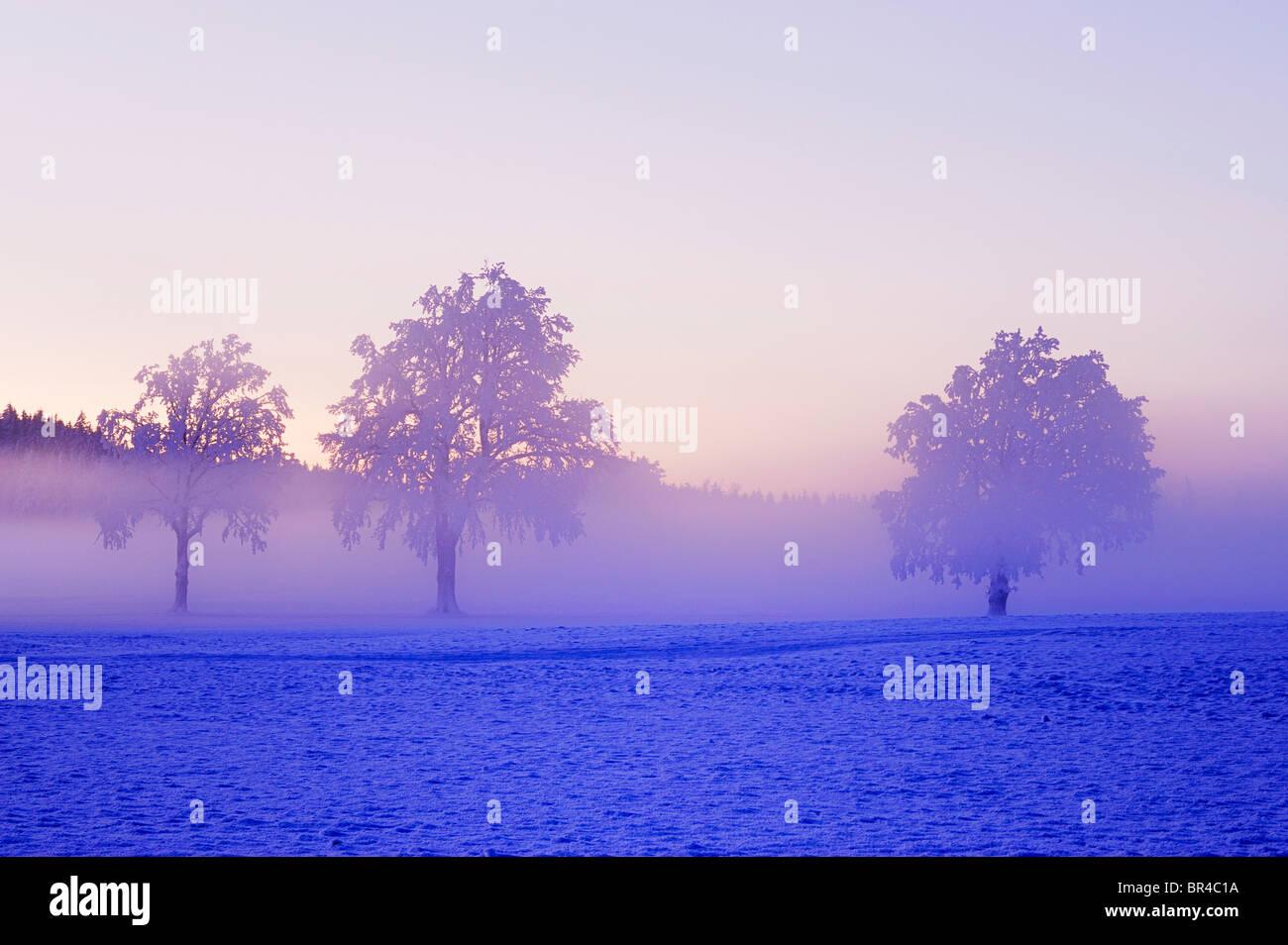 Paisaje invernal envuelta en la niebla, Horben, Aargau, Suiza, Europa Imagen De Stock