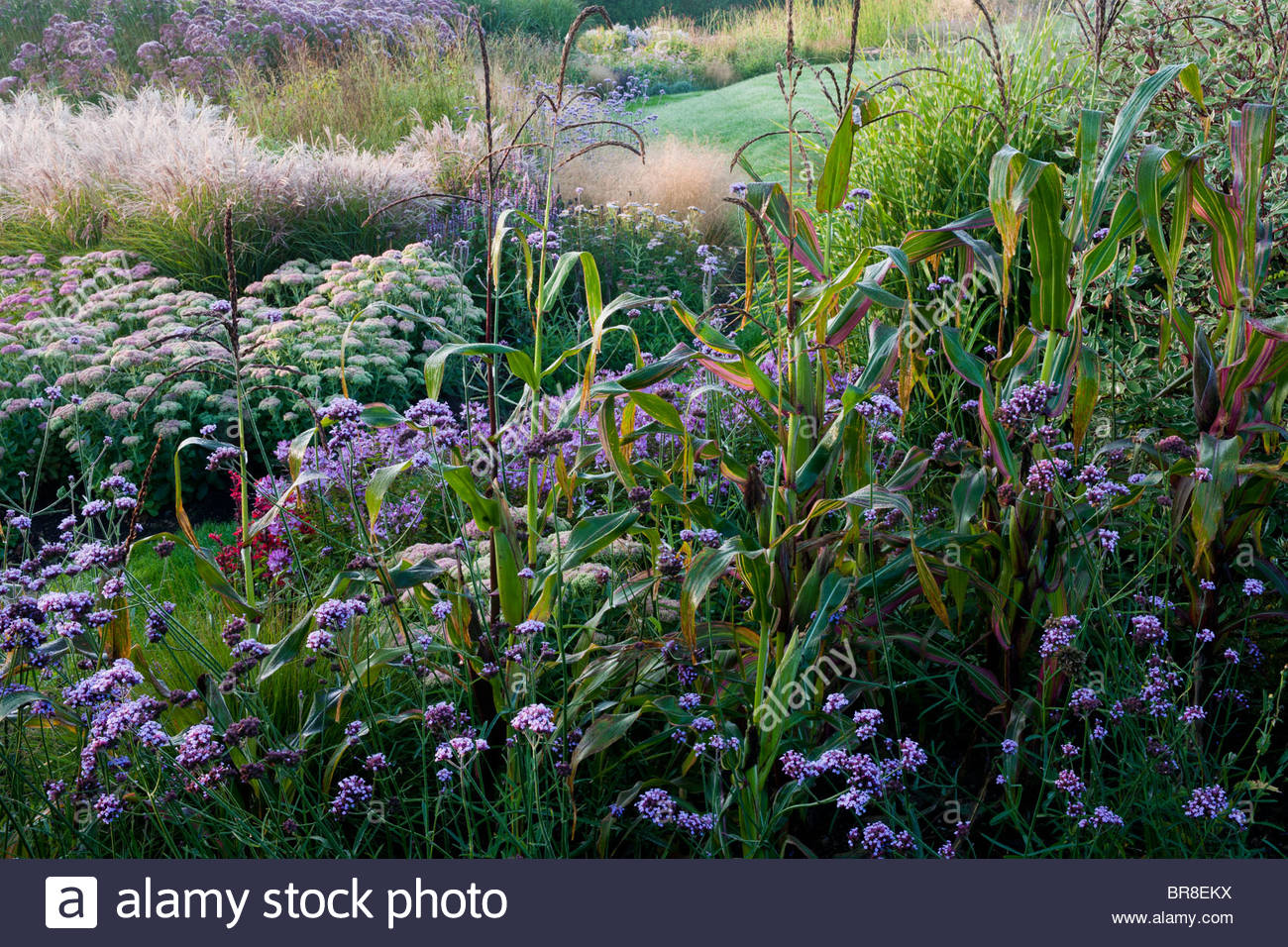 La casa Oast Sussex a finales del verano maceteros Sedum anual de maíz Verbena bonariensis septiembre combinación Imagen De Stock