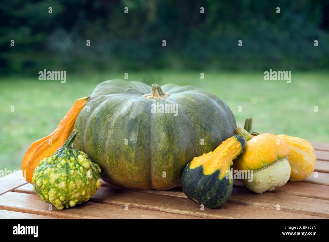 Selección de calabazas ornamentales y comestibles Imagen De Stock
