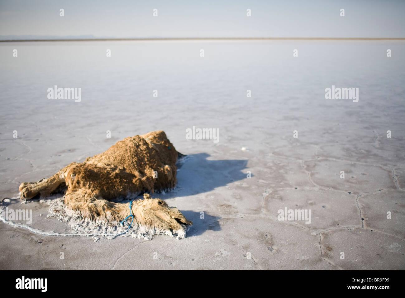 Camello muerto en el centro de Salt Lake cerca de Khur Irán. Imagen De Stock