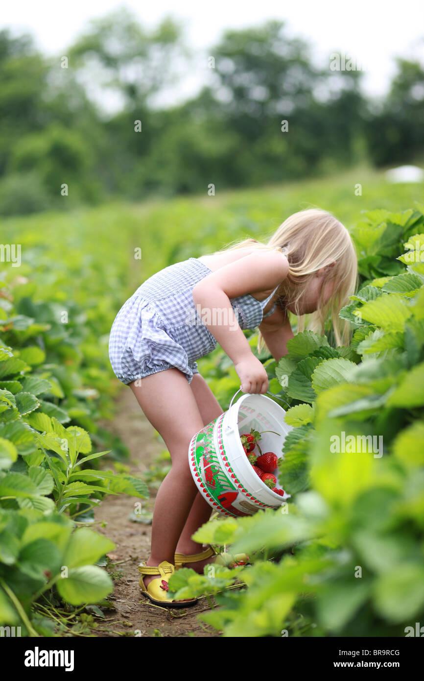Niña recogiendo fresas en el campo de fresas Imagen De Stock