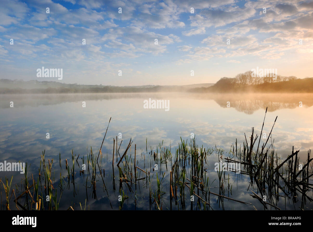 Bajar Tamar Lago, north Devon / frontera de Cornwall, Reino Unido. Niebla por la mañana temprano. Abril 08. Imagen De Stock