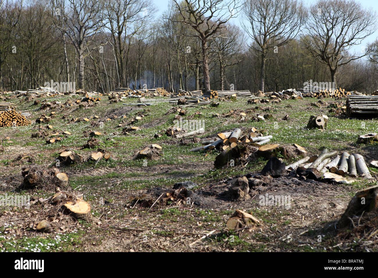La deforestación y la tala de un área boscosa antes de que los nuevos edificios se levantaron. Imagen De Stock