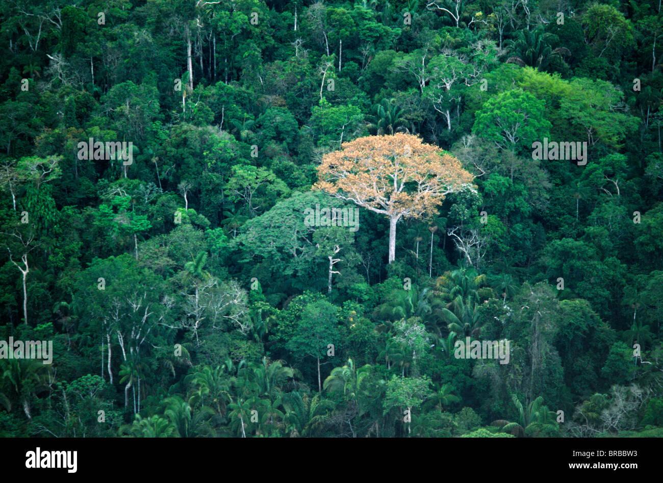 Brasil Acre Serro do Divisor NP Imagen De Stock