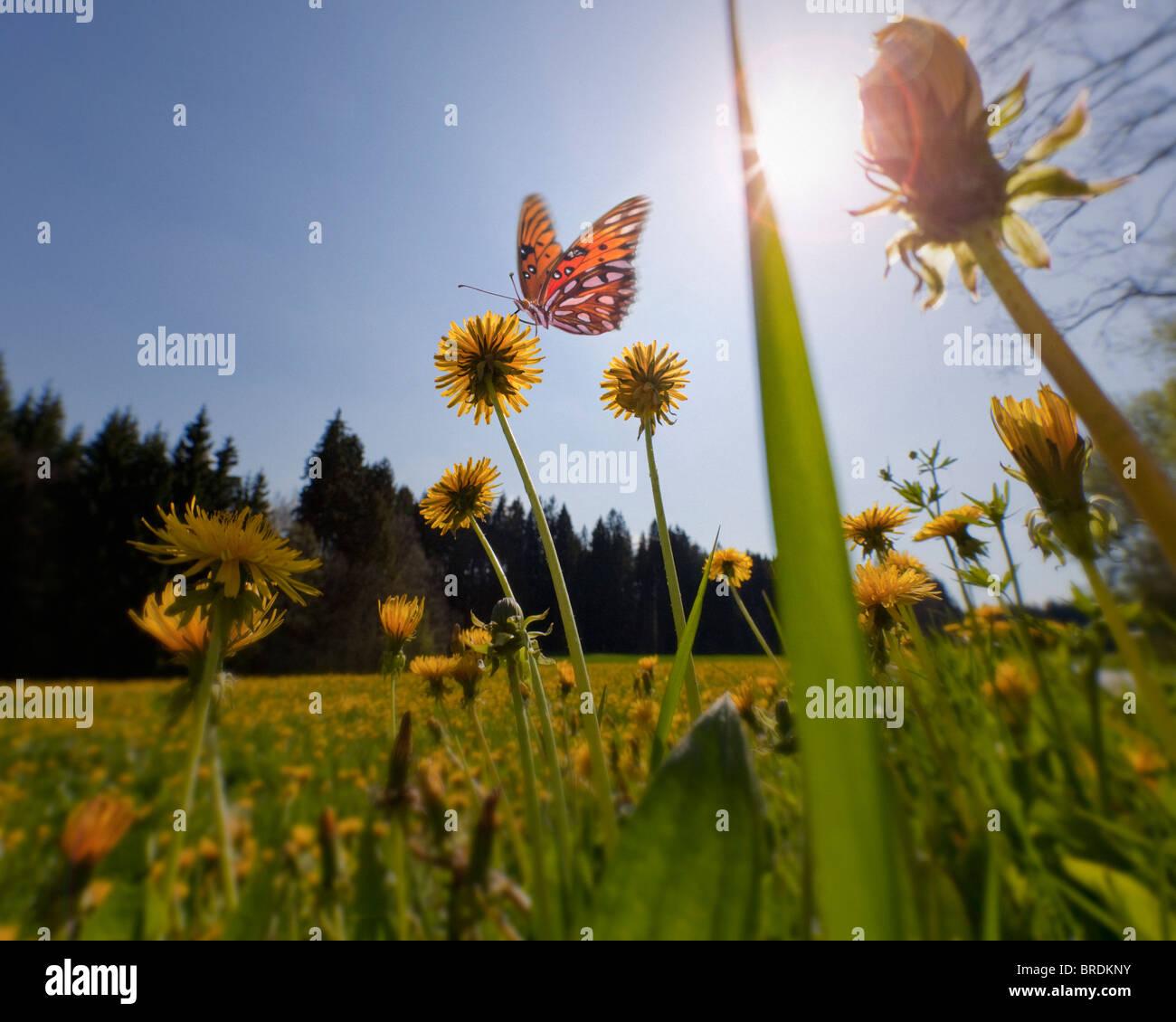 Concepto medioambiental: Spring Meadow (Alemania/Baviera) Foto de stock