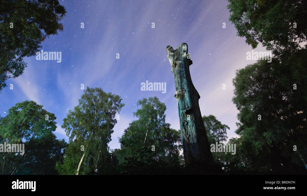 Mirando al norte en el cielo de la noche y las estrellas, New Forest, Hampshire, Reino Unido Imagen De Stock