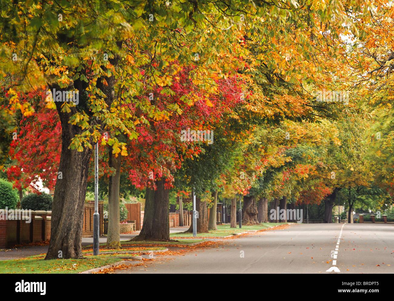 Avenida con árboles otoñales en Royal Leamington Spa, Royal Leamington Spa, Warwickshire, Inglaterra, Reino Unido. Foto de stock
