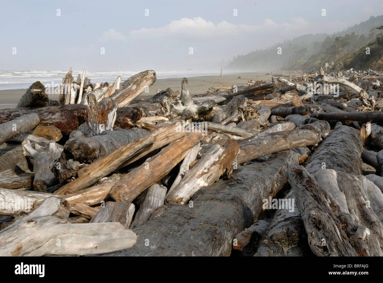 Driftwood Driftlogs, sobre la costa del Pacífico en reflujo, Kalaloch, Península Olímpica, Washington, EE.UU. Foto de stock