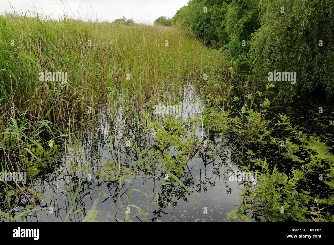 Ubicación de la pista de dulce Shapwick Heath Reserva Natural Nacional Foto de stock