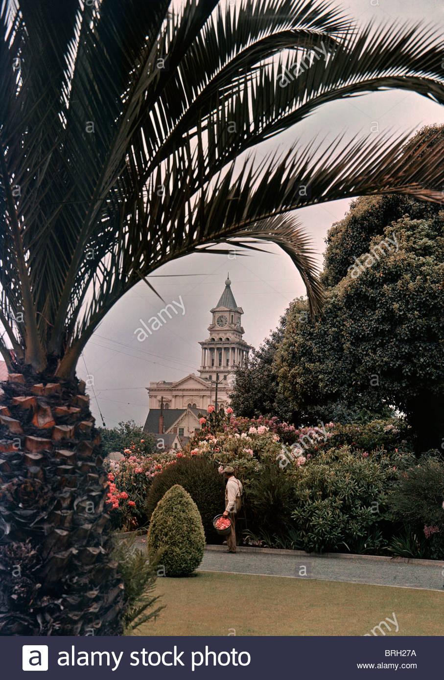 El Eureka Courthouse, enmarcadas por palmeras datileras y ...