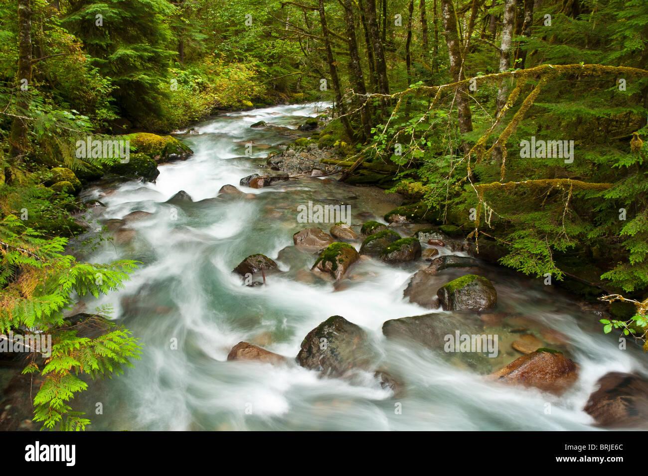 North Fork Cascada Río, Monte Baker-Snoqualmie National Forest, North Cascades, Washington. Imagen De Stock
