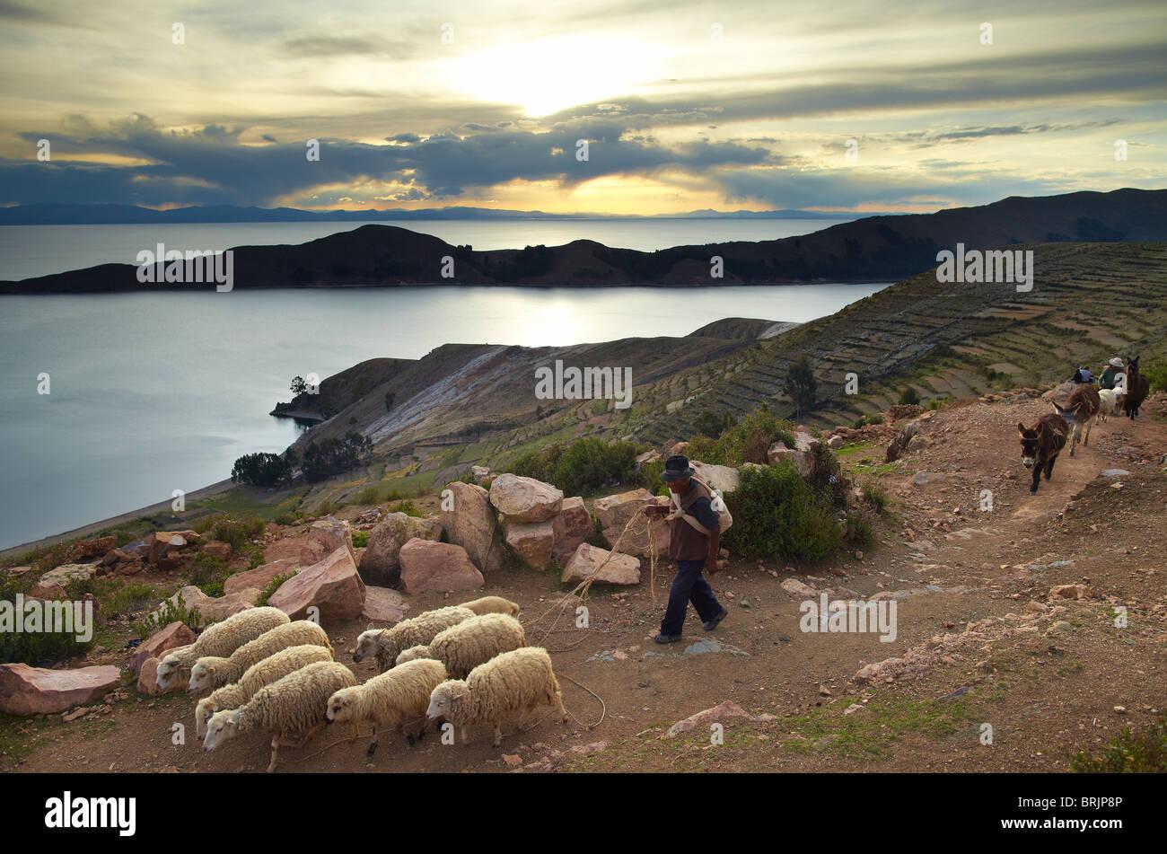 Un granjero con sus ovejas en la Isla del Sol, Lago Titicaca, Bolivia Imagen De Stock