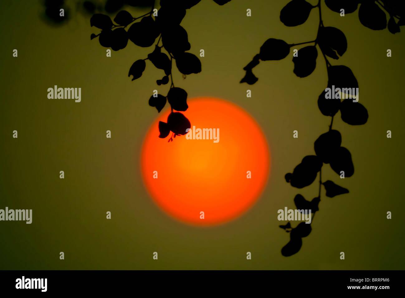 Un gran sol rojo-naranja se cuelga en una espesa atmósfera poco antes de la puesta del sol. Imagen De Stock