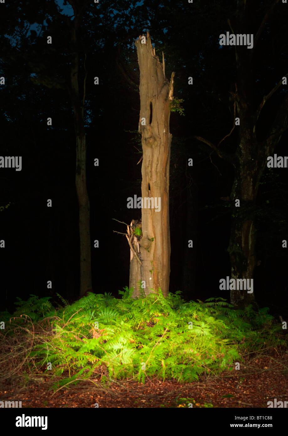 Lone muertos tall tronco de árbol rodeado por helechos y hojas de cobre de otoño Imagen De Stock