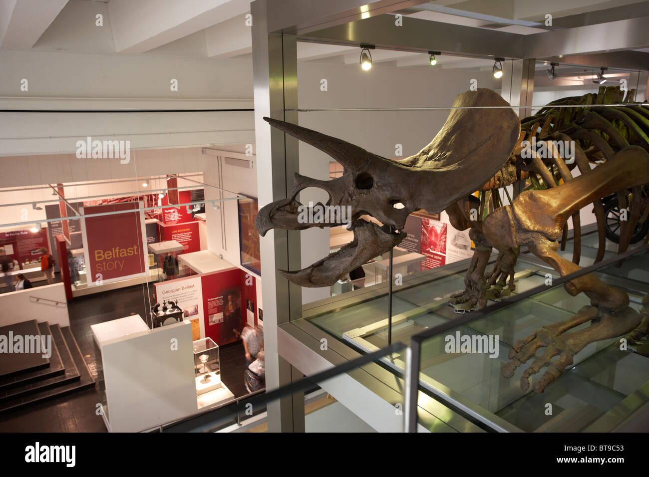 Modelo triceratops exhibición del renovado Museo de Ulster Belfast, Irlanda del Norte ni UK Foto de stock