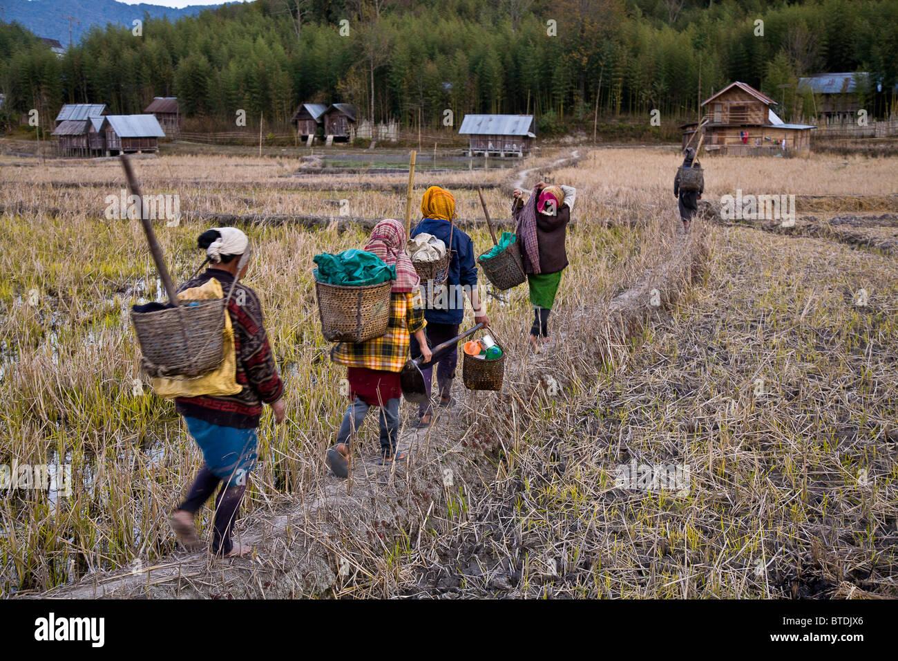 Un grupo de mujeres tribales Apatani tras haber re-contorneado el bare arrozales regresar a su aldea para preparar Imagen De Stock