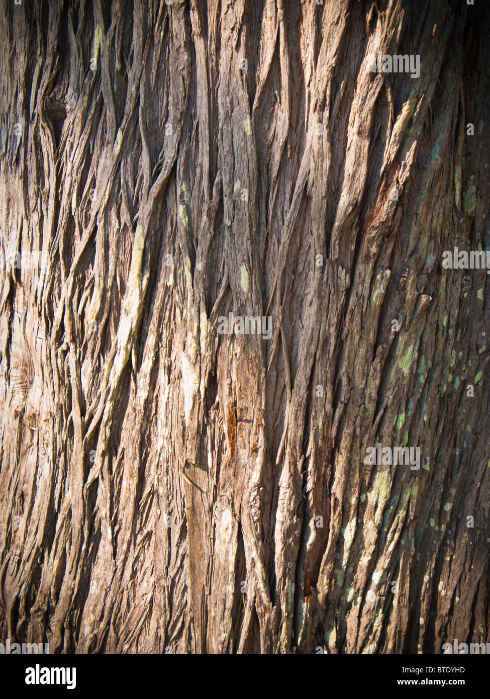 La corteza de los árboles cercanos Imagen De Stock