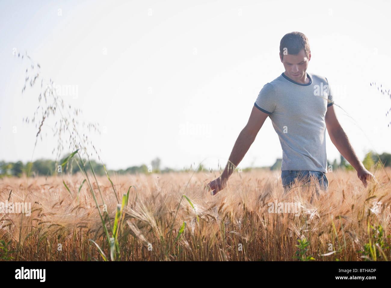 Hombre caminando a través del campo de trigo Foto de stock