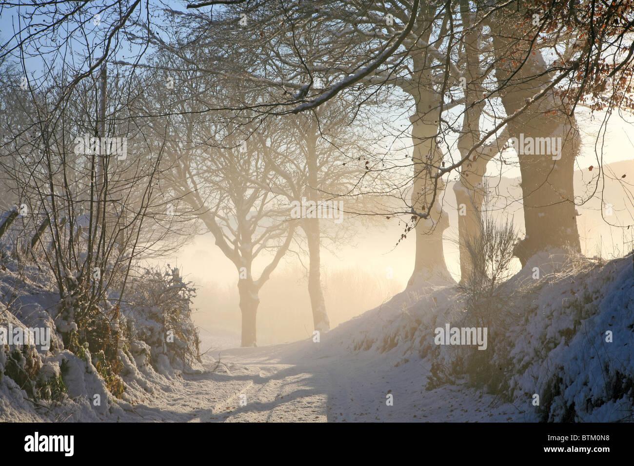 Reino Unido Escocia Misty Tayside árboles en invierno Foto de stock
