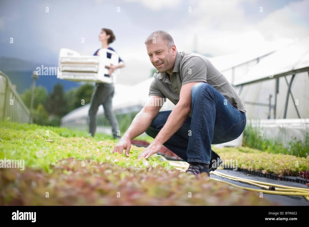 Cultivo de hortalizas y frutas Imagen De Stock