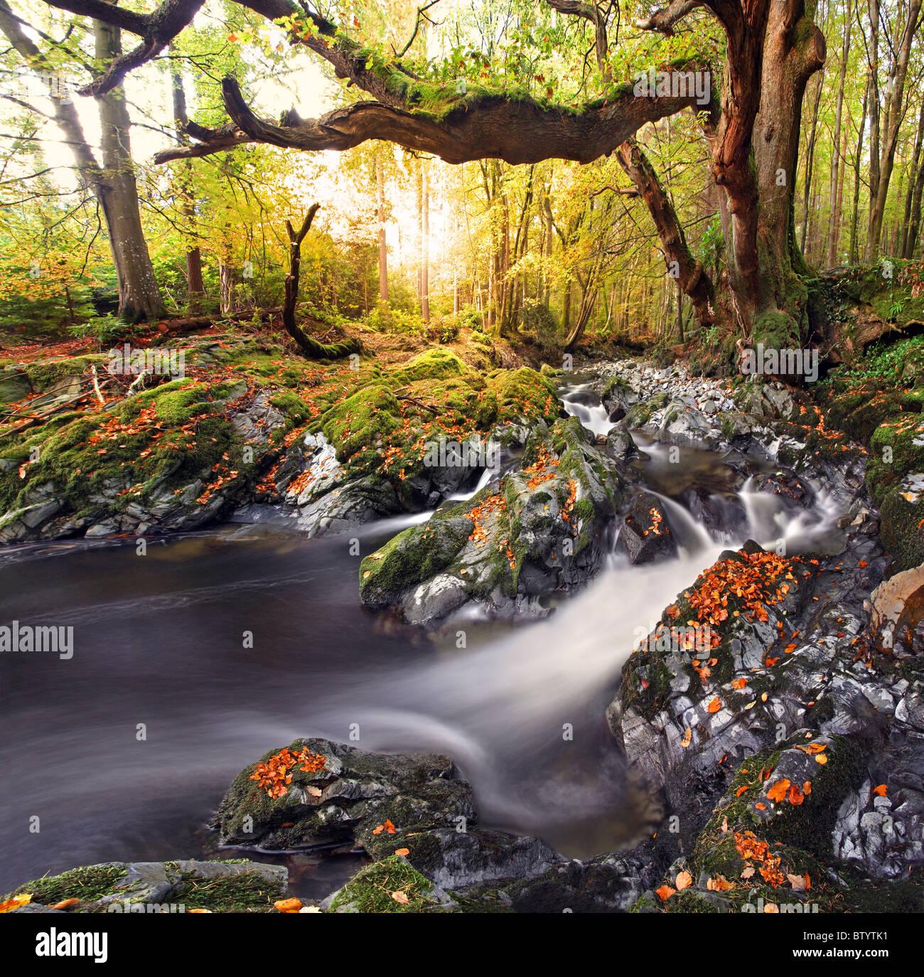 Tollymore park, Irlanda del Norte. Foto de stock