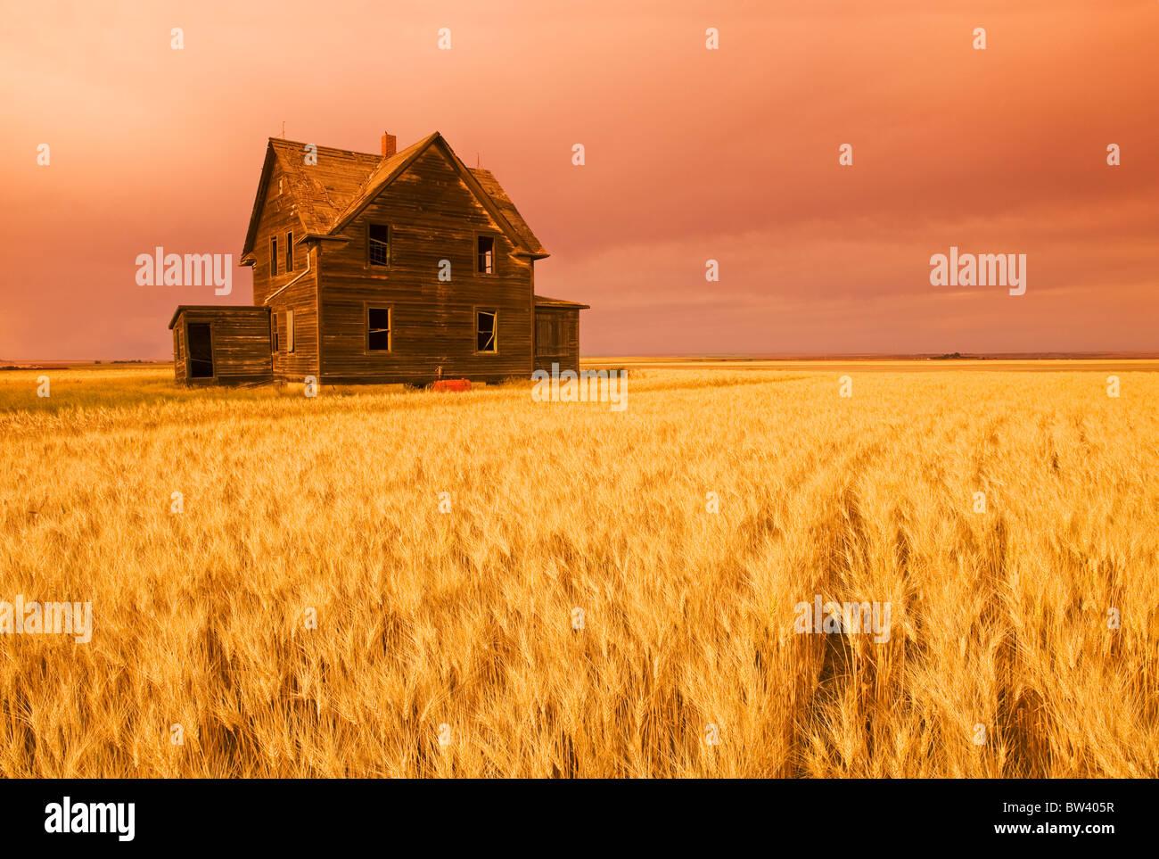 Granja abandonada Casa, viento campo de trigo duro cerca de Assiniboia, Saskatchewan Imagen De Stock
