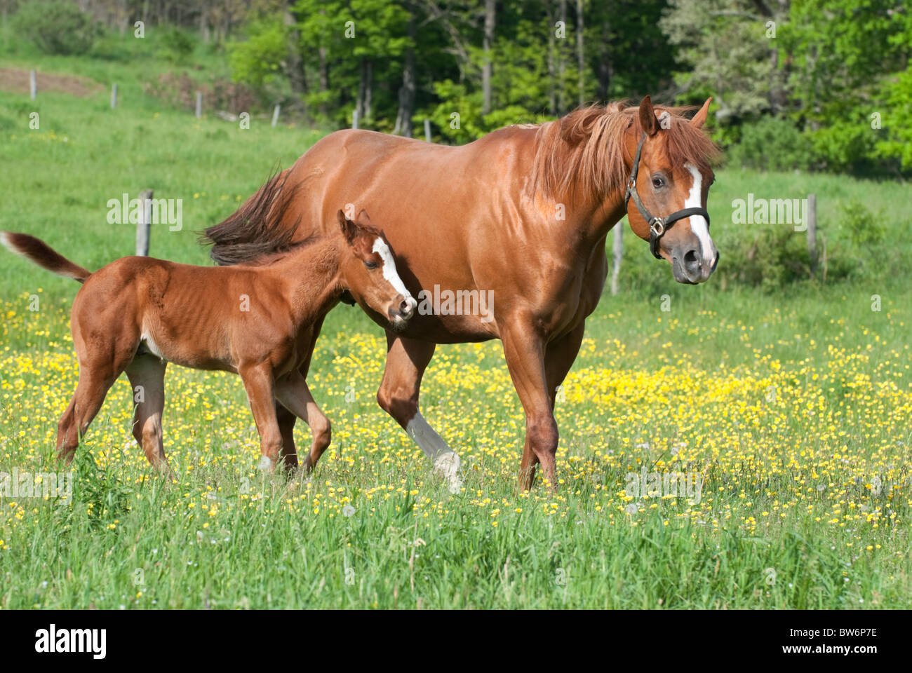 mother horse and colt
