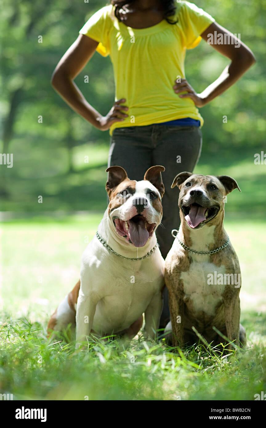Dos perros con su dueño Foto de stock