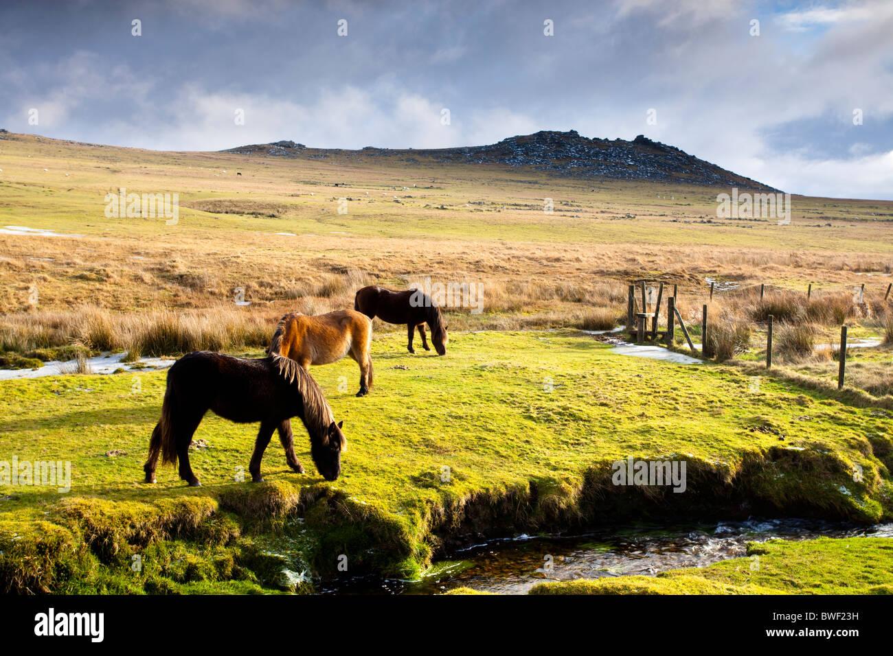 Caballos en Bodmin Moor con áspero Tor en el fondo. Foto de stock
