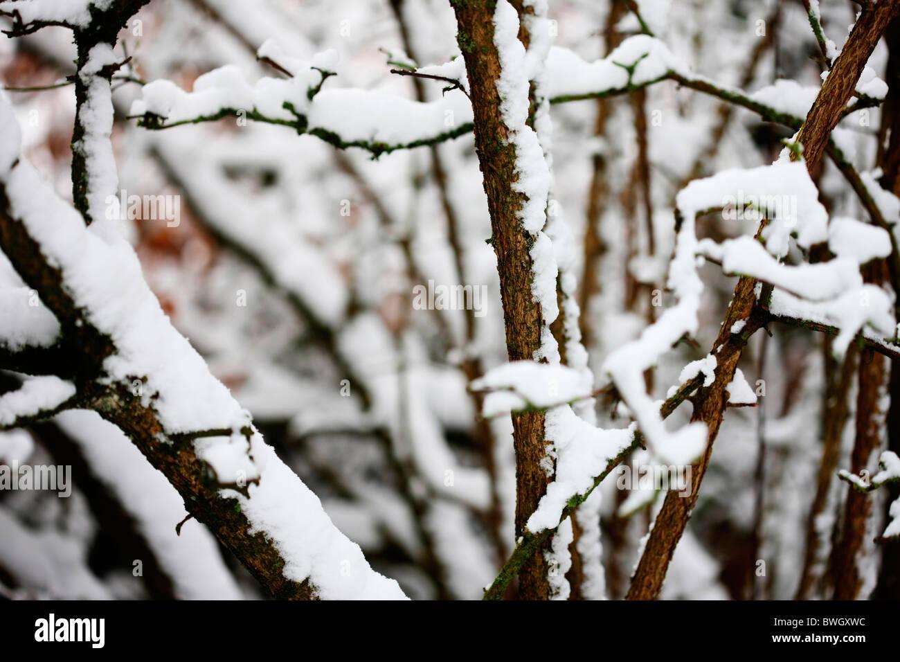 Una escena de invierno de nieve laden cerezo ramas - fotografía artística Jane-Ann Butler Fotografía JABP957 con derechos gestionados Foto de stock