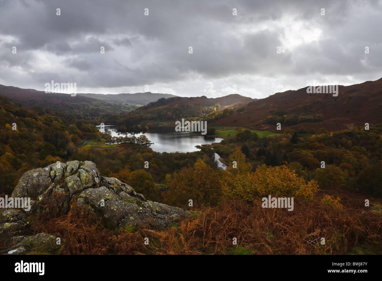 Rydal Water de musgo blanco común, Lake District National Park, Cumbria, Inglaterra Imagen De Stock