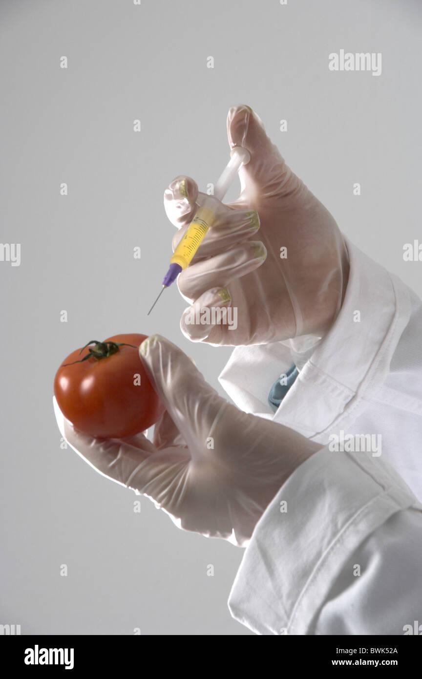 Tomate manos mano jeringa de inyección guantes elásticos de investigación de laboratorio de biotecnología investigador Foto de stock