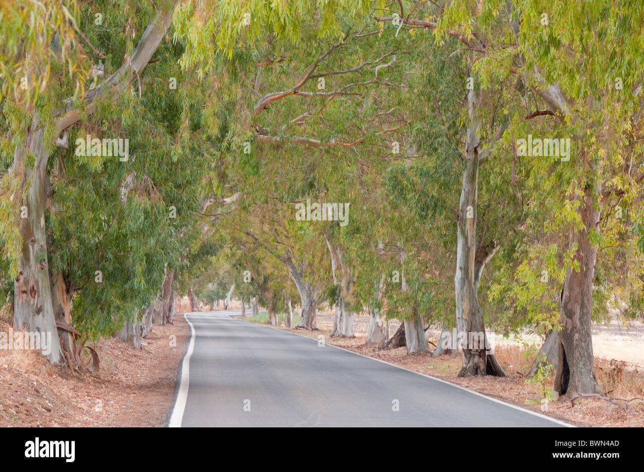 Camino con árboles Foto de stock