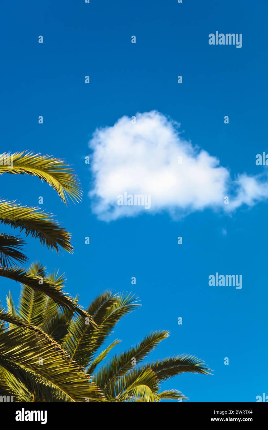 Hojas de palma y nube blanca contra el cielo azul Imagen De Stock