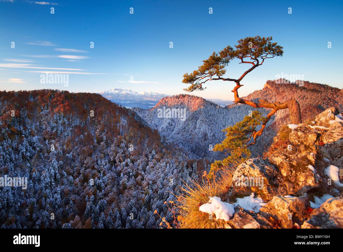 Único árbol en las montañas Pieniny, Pico Sokolica, Polonia Foto de stock