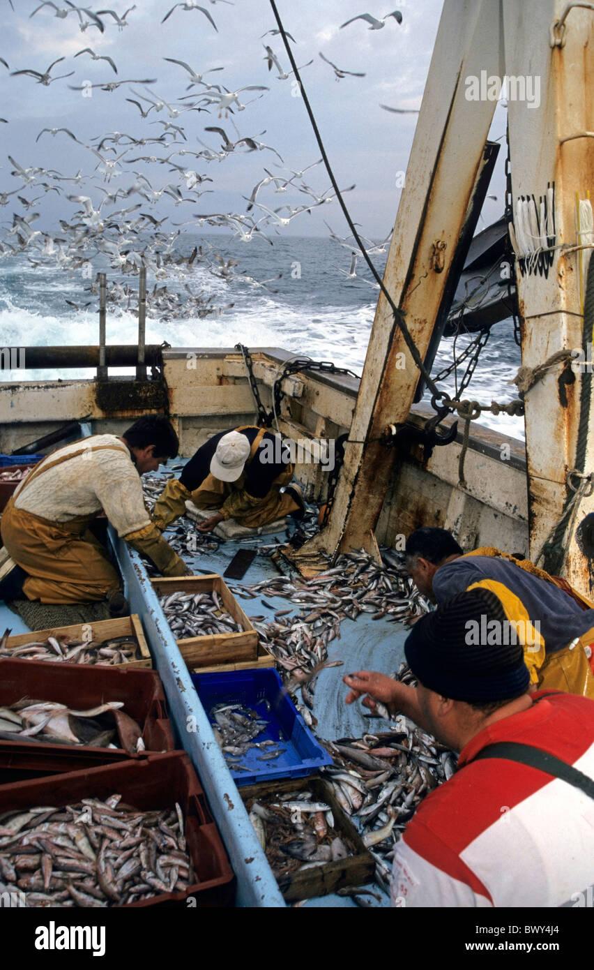 Clasificación de los pescadores con sus capturas en la cubierta de un arrastrero de pesca mientras una bandada de gaviotas círculos sobrecarga, Marsella, Francia. Foto de stock