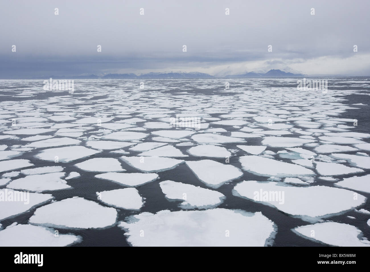Témpano de hielo a la deriva, Groenlandia, el Ártico, las regiones polares Imagen De Stock