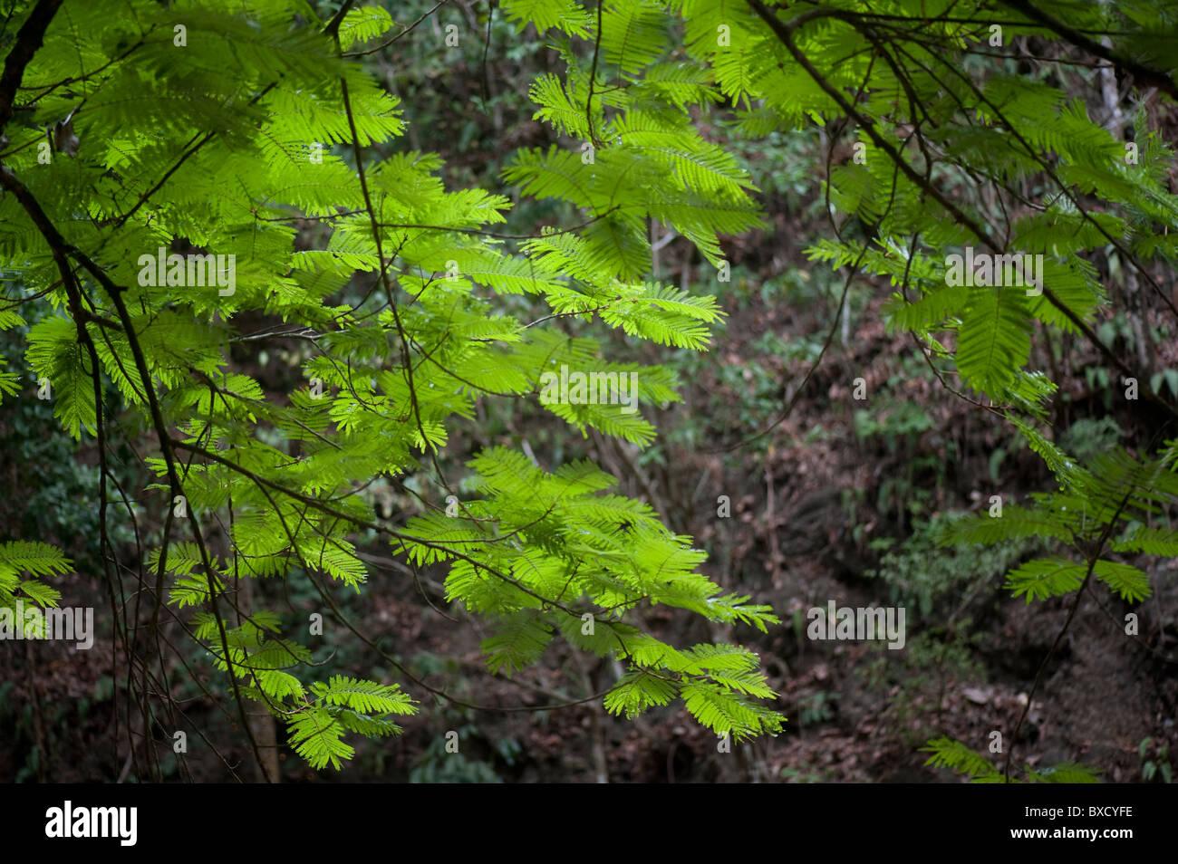 Las hojas de la verde jungla tropical Foto Imagen De Stock