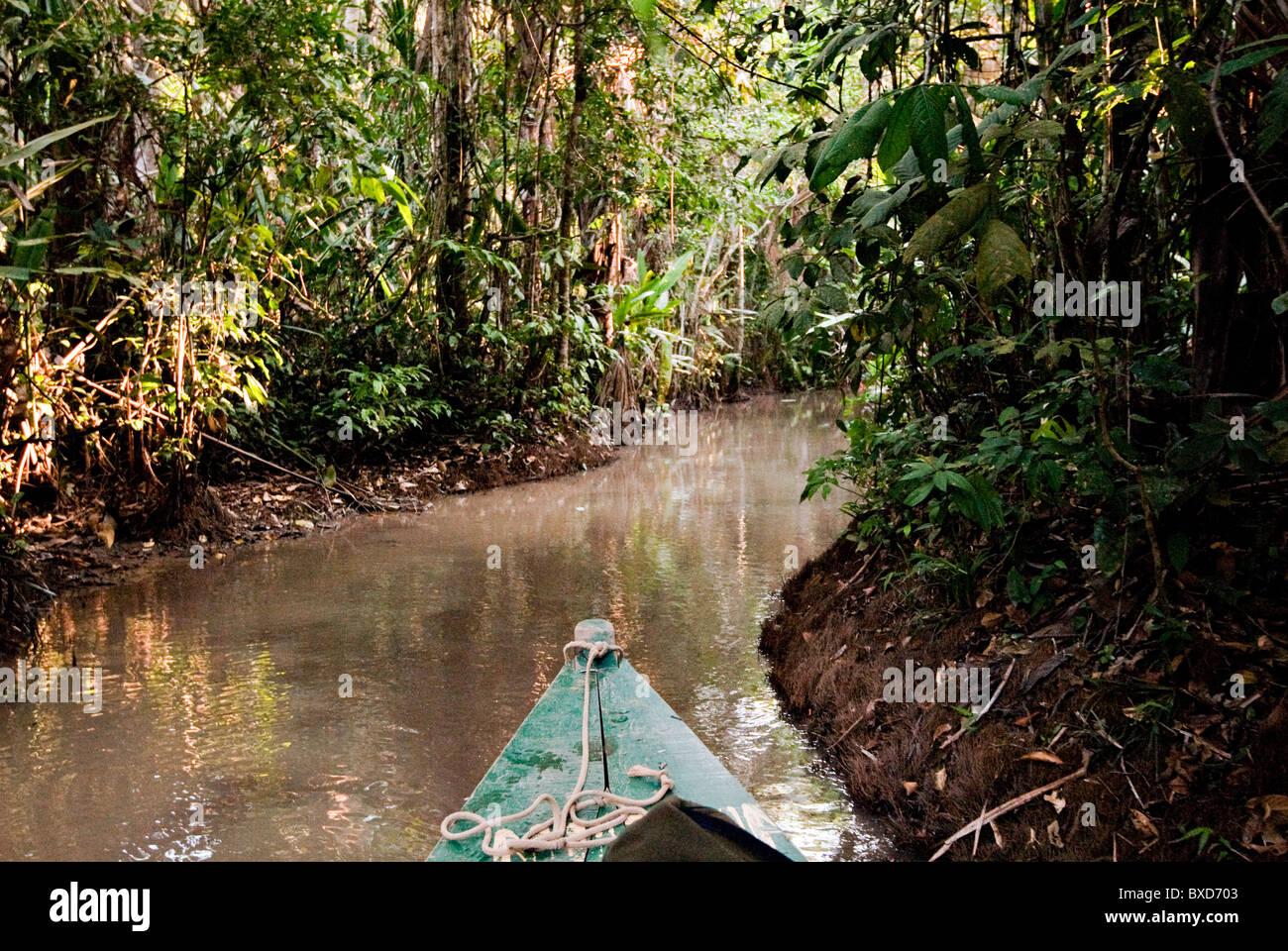 Selva Amazónica, Puerto Maldanado, Perú. Imagen De Stock