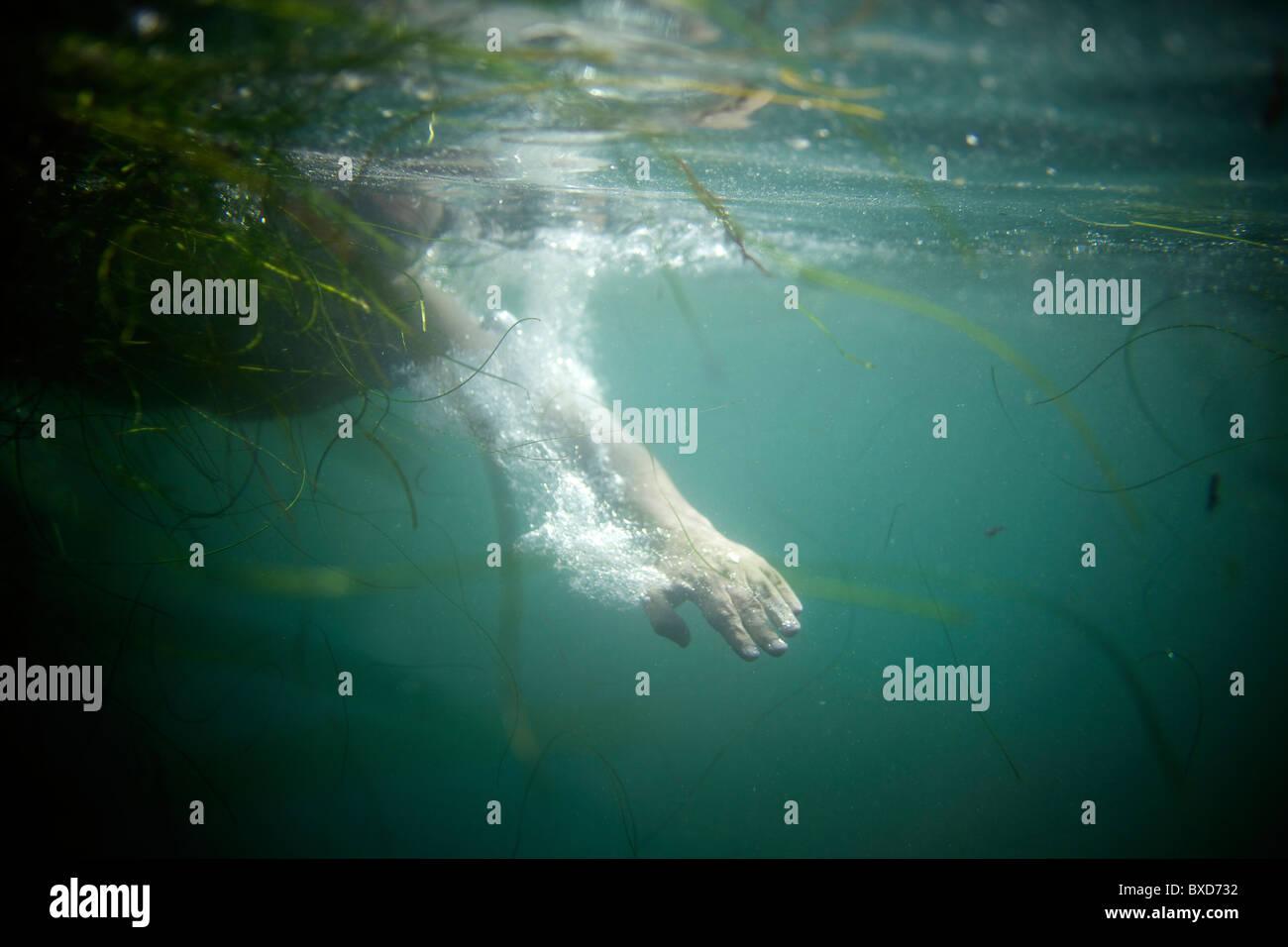 Filmación subacuática de la mano de un nadador junto a algas verdes. Imagen De Stock