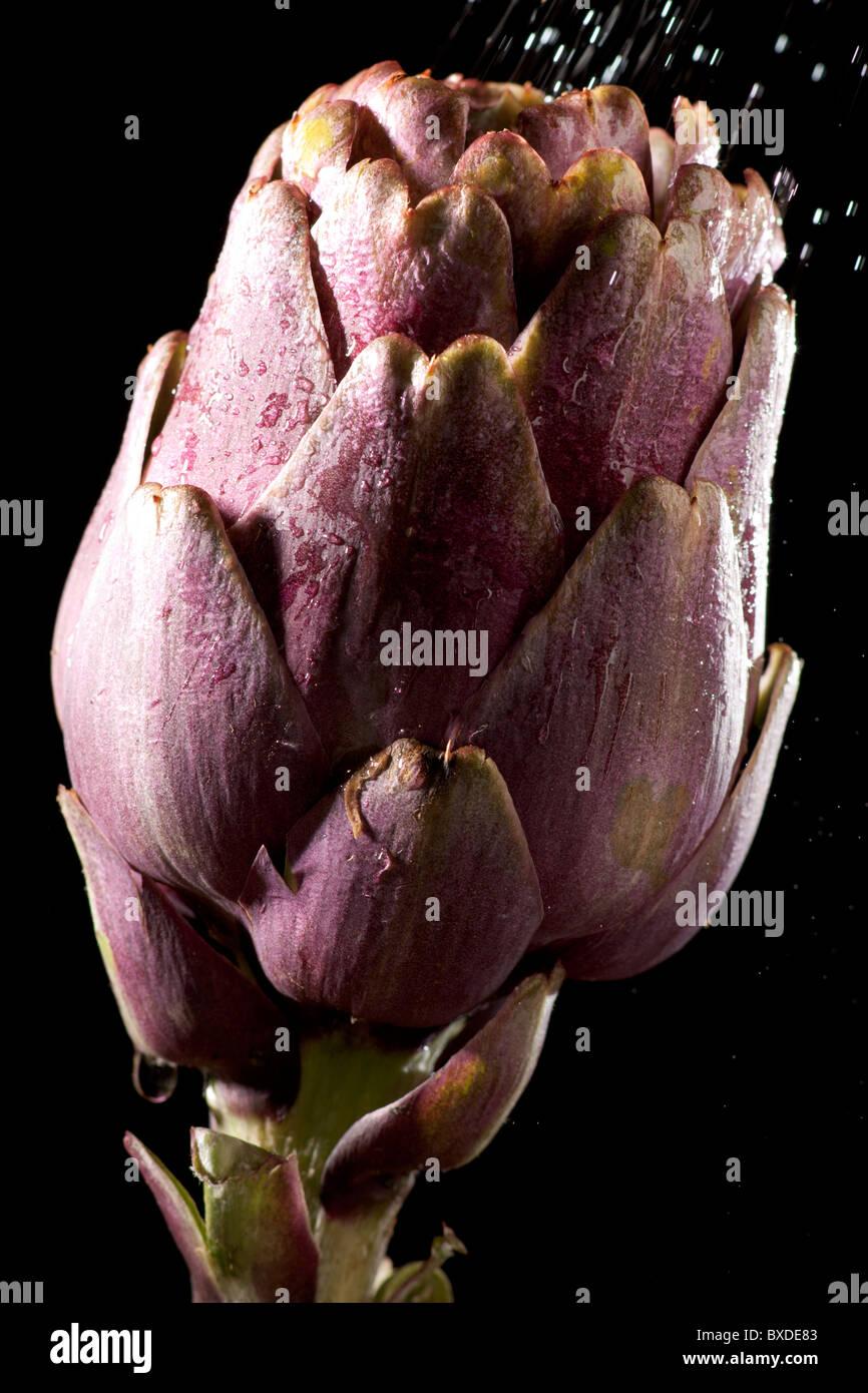 Mojado de la alcachofa Imagen De Stock