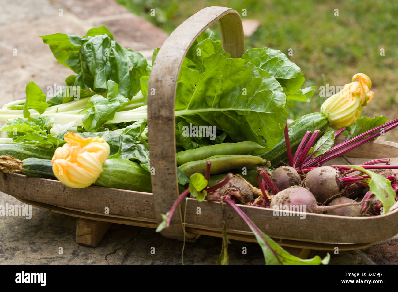 Trug de productos frescos, calabacines, betarraga, espinaca, acelga y habas Imagen De Stock