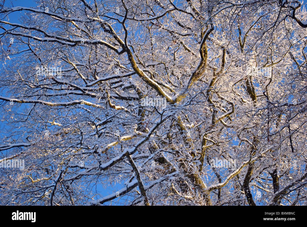 Árboles de texturas de fondo Imagen De Stock