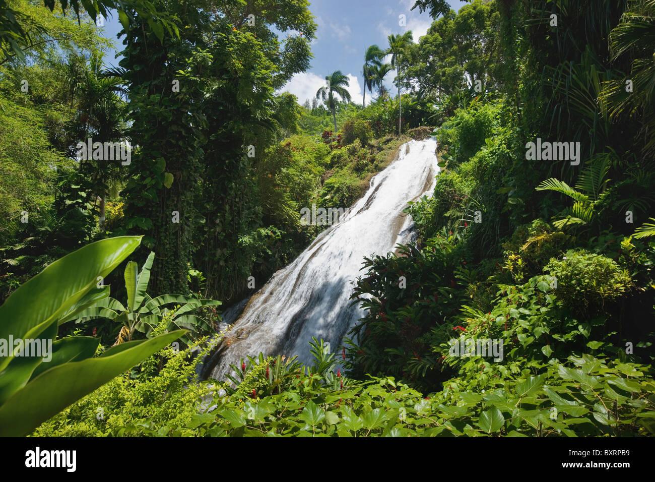 Jamaica, Ocho Ríos, el Shaw Park, Cascada en jardines botánicos Foto de stock