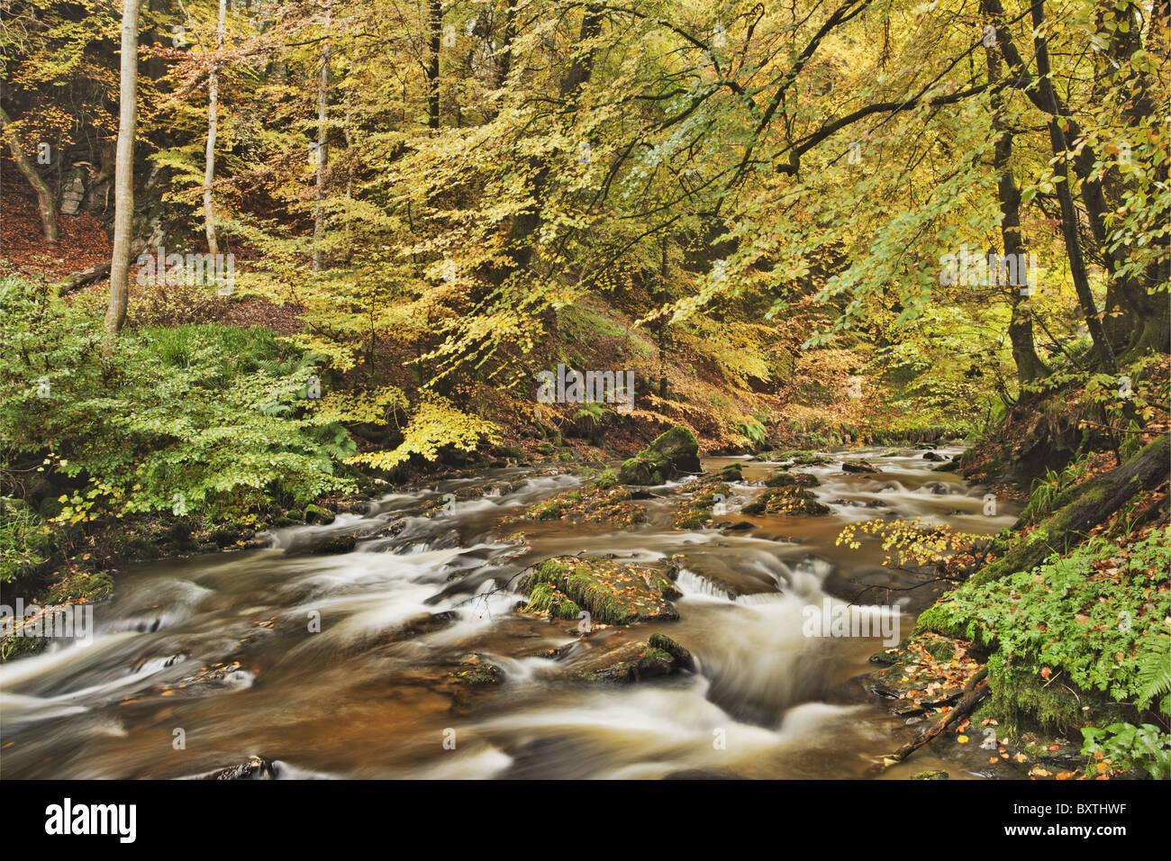 Cubierta de hojas otoñales de los árboles a lo largo de un arroyo en Escocia. Imagen De Stock