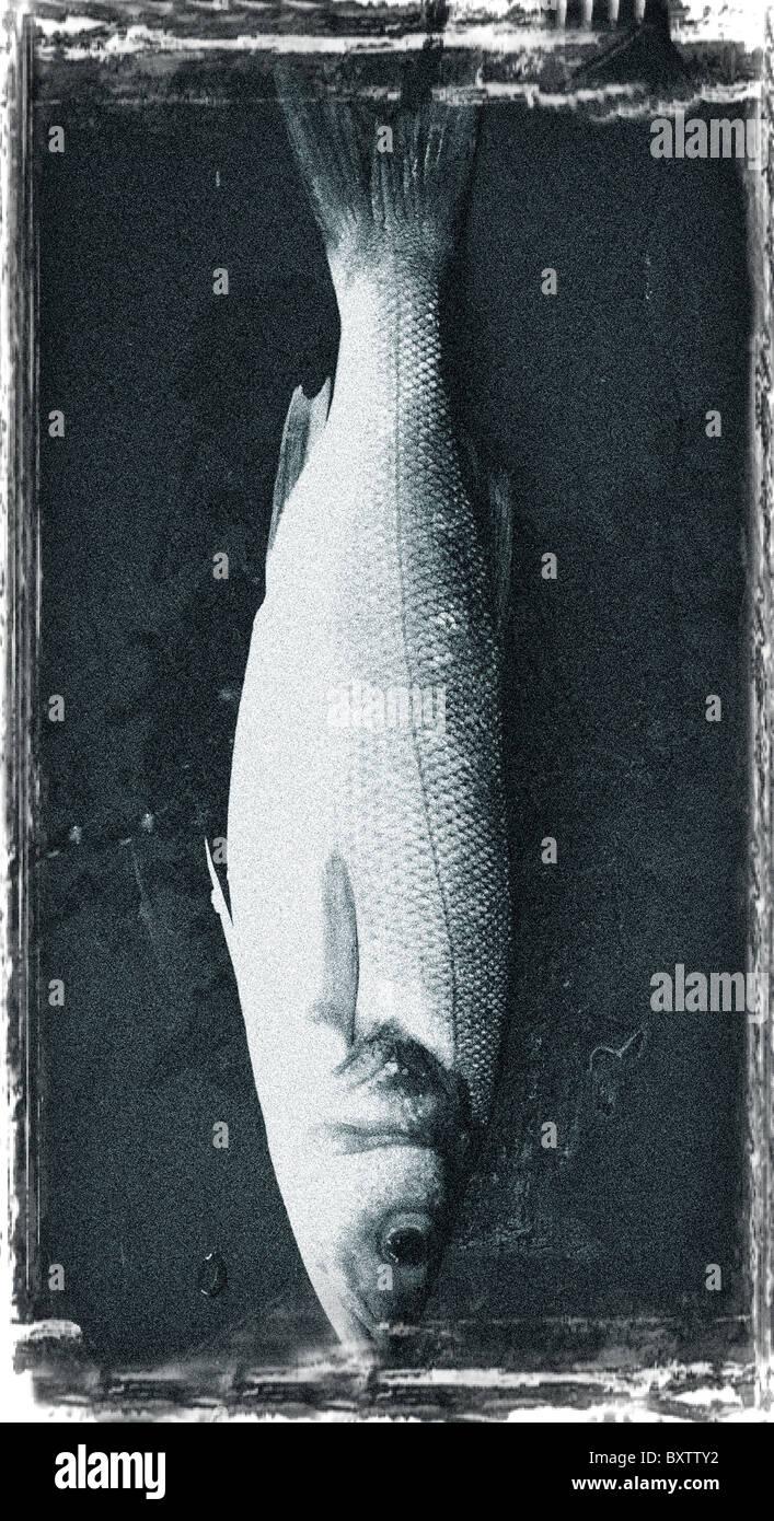 Una lubina Welsh Slate en una fotografía en blanco y negro fino arte Foto de stock
