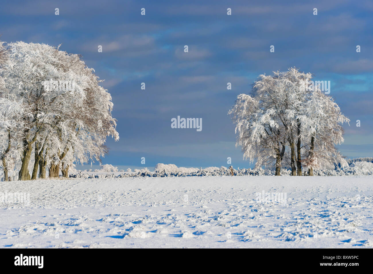 En el horizonte de árboles cubiertos de nieve y helada hoar. Cerca Balfron, Stirling, Escocia, Reino Unido Foto de stock
