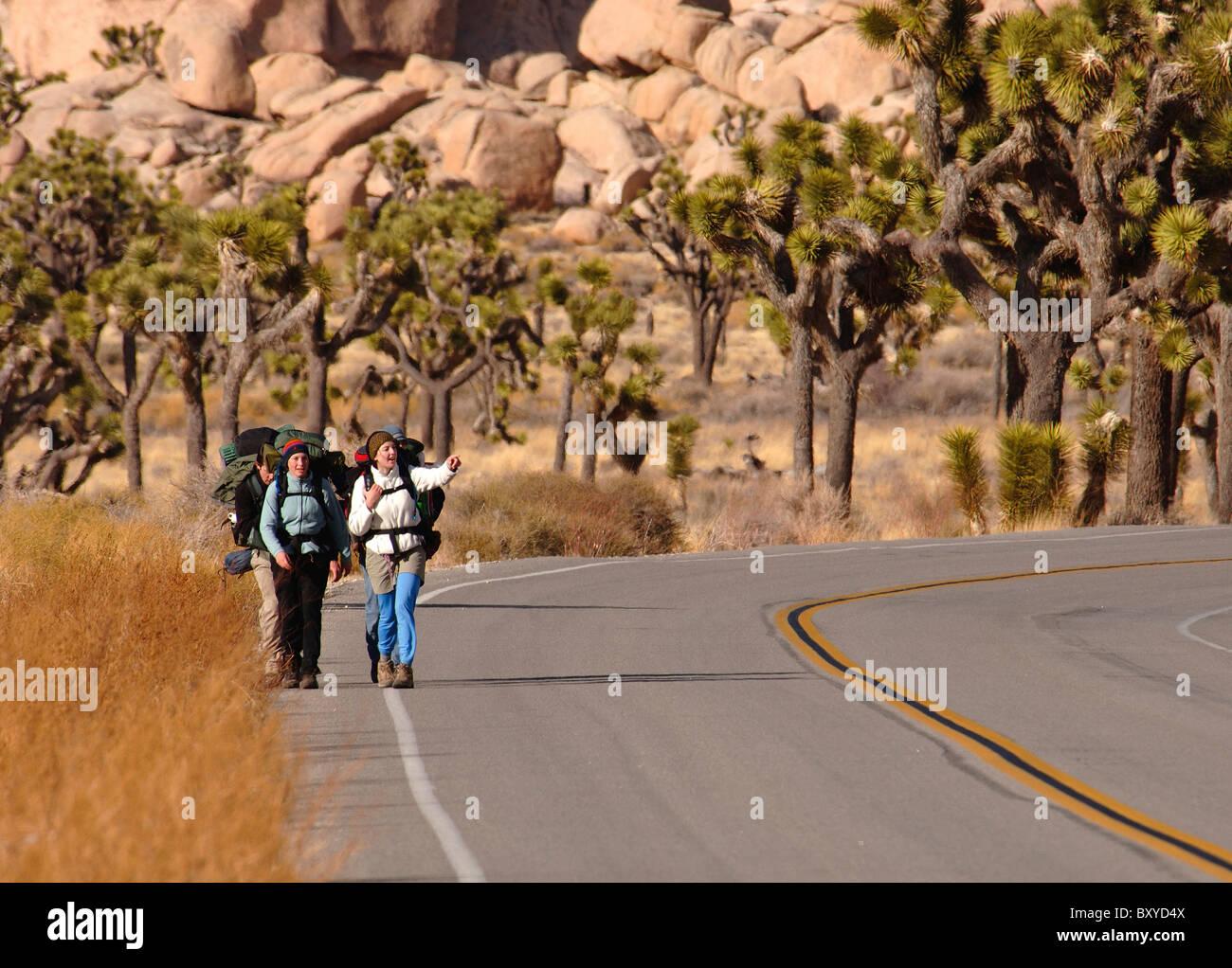 Los mochileros en la carretera a través del Parque Joshua Tree, Yucca brevifolia, el desierto de Mojave, California, Imagen De Stock