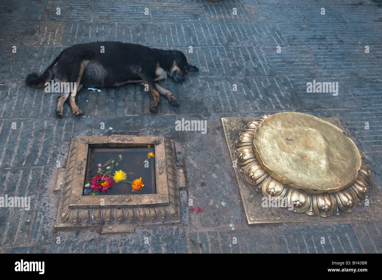 Perro día tarde, la hora de la siesta en Swayambunath, el Monkey Temple en Katmandú, Nepal Imagen De Stock