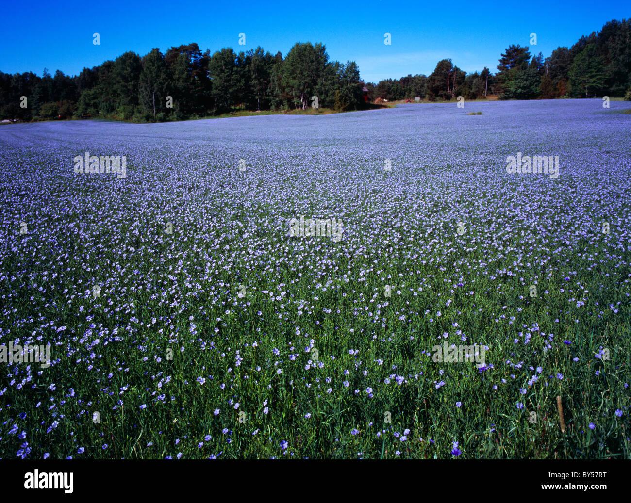 Suecia, Vastergotland, Kallandso Foto de stock